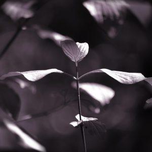 La danse des feuilles